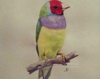 Эскиз птица акварель
