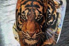 tiger-tattoo-12
