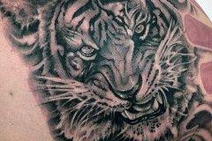 tiger-tattoo-123