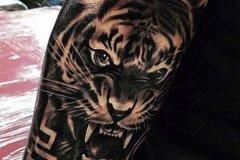 tiger-tattoo-152