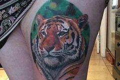 tiger-tattoo-21