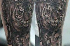 tiger-tattoo-25