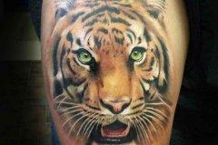 tiger-tattoo-32
