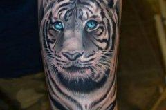 tiger-tattoo-36