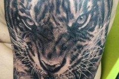 tiger-tattoo-63
