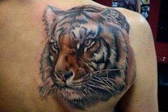 tiger-tattoo-64